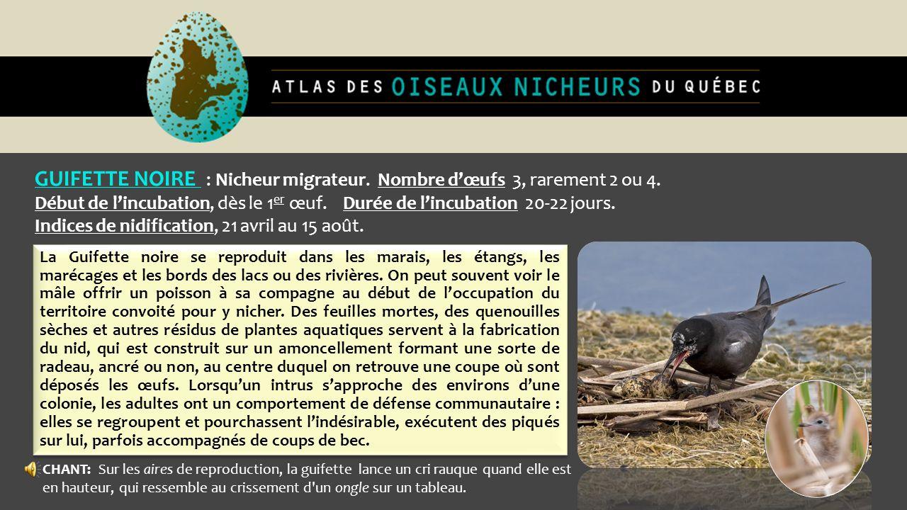 GUIFETTE NOIRE : Nicheur migrateur. Nombre dœufs 3, rarement 2 ou 4. Début de lincubation, dès le 1 er œuf. Durée de lincubation 20-22 jours. Indices