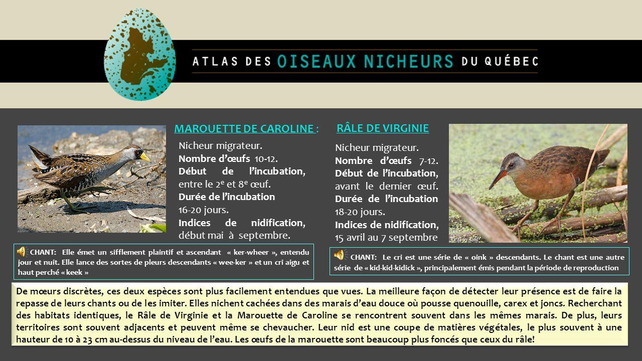 Nicheur migrateur. Nombre dœufs 7-12. Début de lincubation, avant le dernier œuf. Durée de lincubation 18-20 jours. Indices de nidification, 15 avril