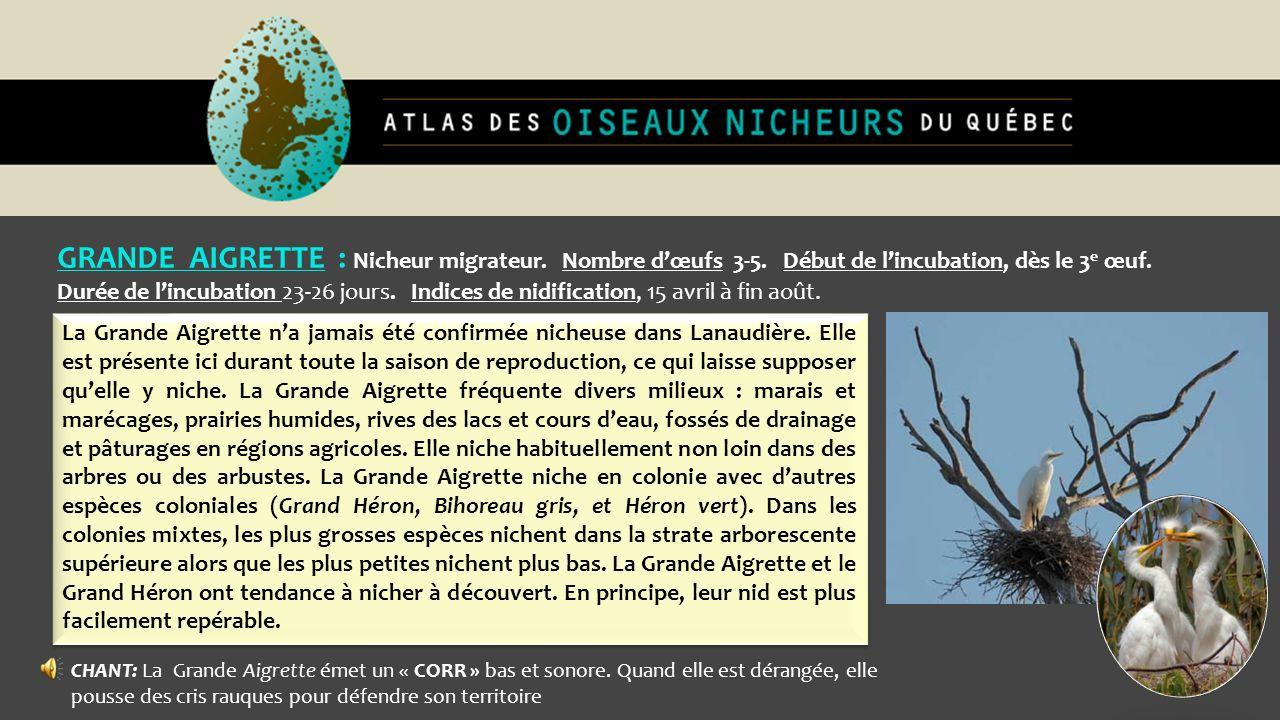 GRANDE AIGRETTE : Nicheur migrateur. Nombre dœufs 3-5. Début de lincubation, dès le 3 e œuf. Durée de lincubation 23-26 jours. Indices de nidification