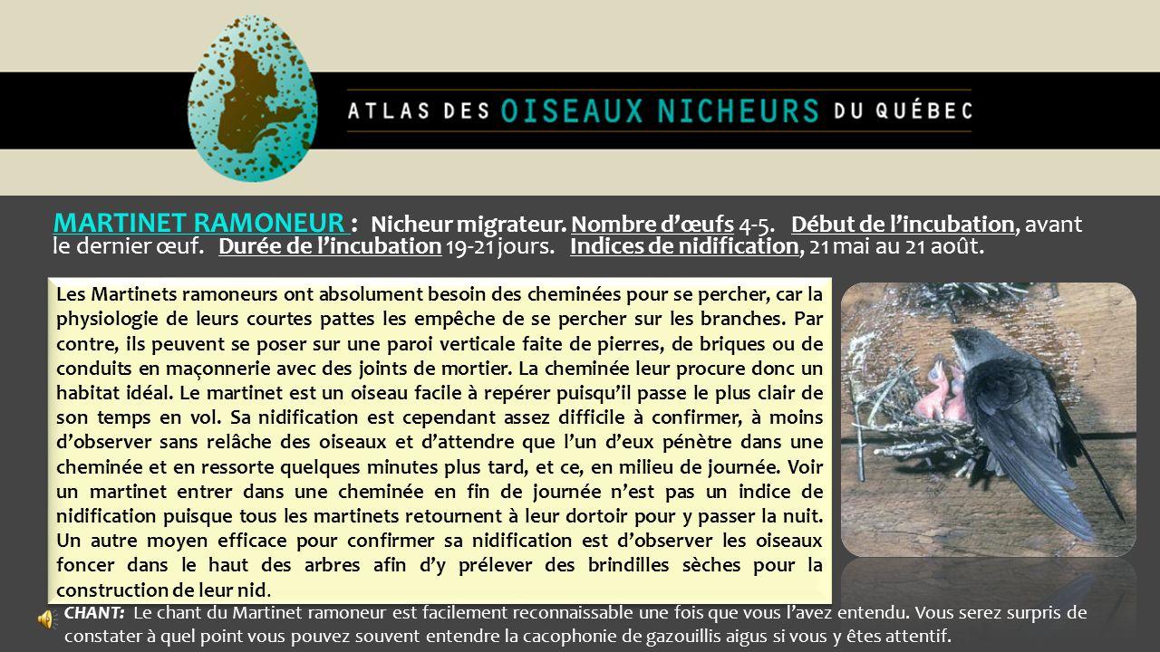MARTINET RAMONEUR : Nicheur migrateur. Nombre dœufs 4-5. Début de lincubation, avant le dernier œuf. Durée de lincubation 19-21 jours. Indices de nidi