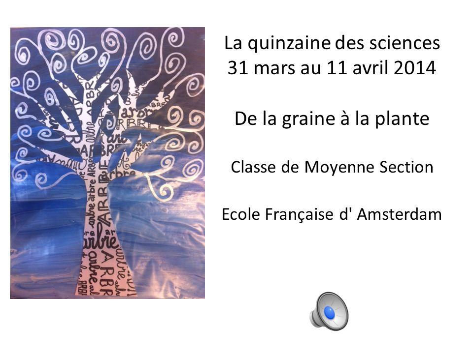 La quinzaine des sciences 31 mars au 11 avril 2014 De la graine à la plante Classe de Moyenne Section Ecole Française d Amsterdam