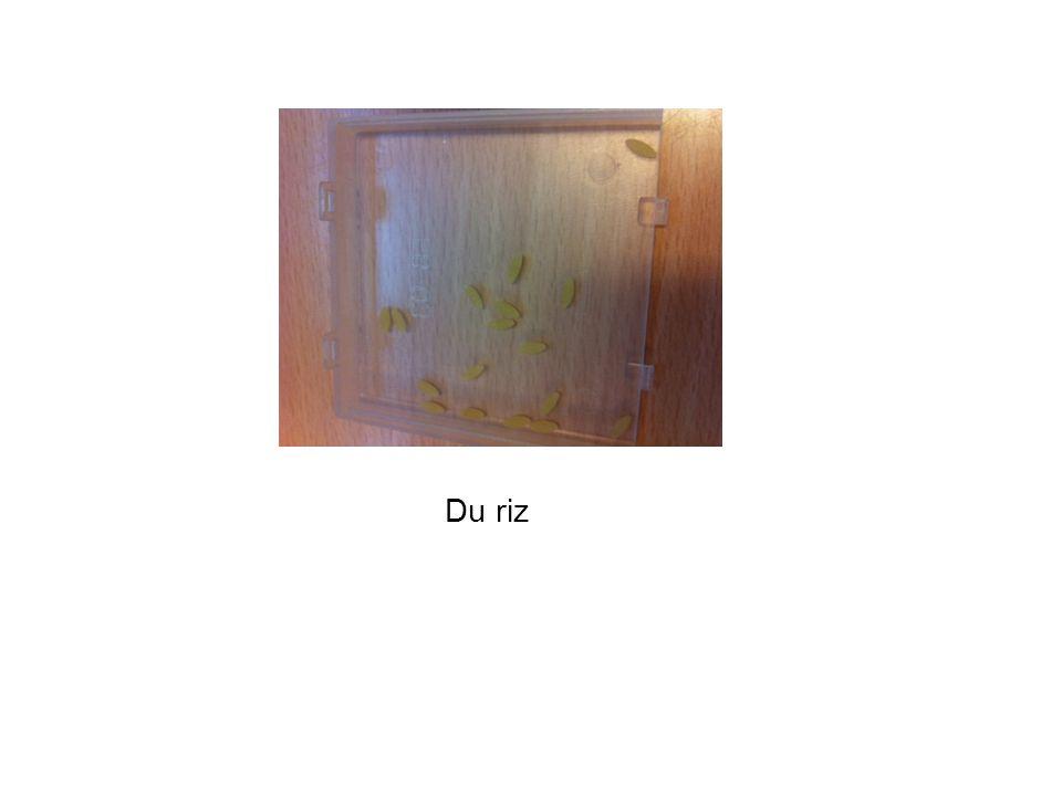 La boite OUI Dans la boite OUI, les graines ont germé et des plantes ont poussé. Ce qui est normal