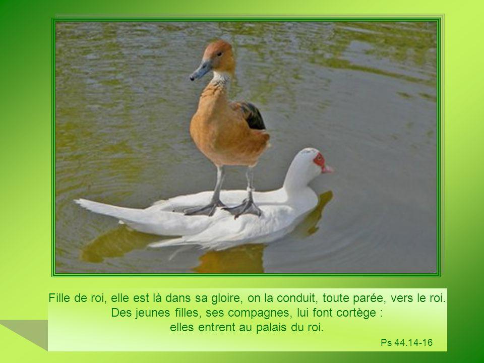 Auprès du Seigneur, jai mon refuge.Comment pouvez-vous me dire : oiseaux, fuyez à la montagne .