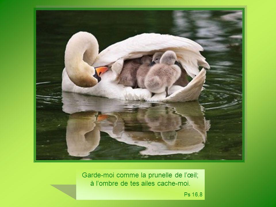 Quil est bon, quil est doux pour des frères de vivre ensemble et dêtre unis ! Ps 132,1
