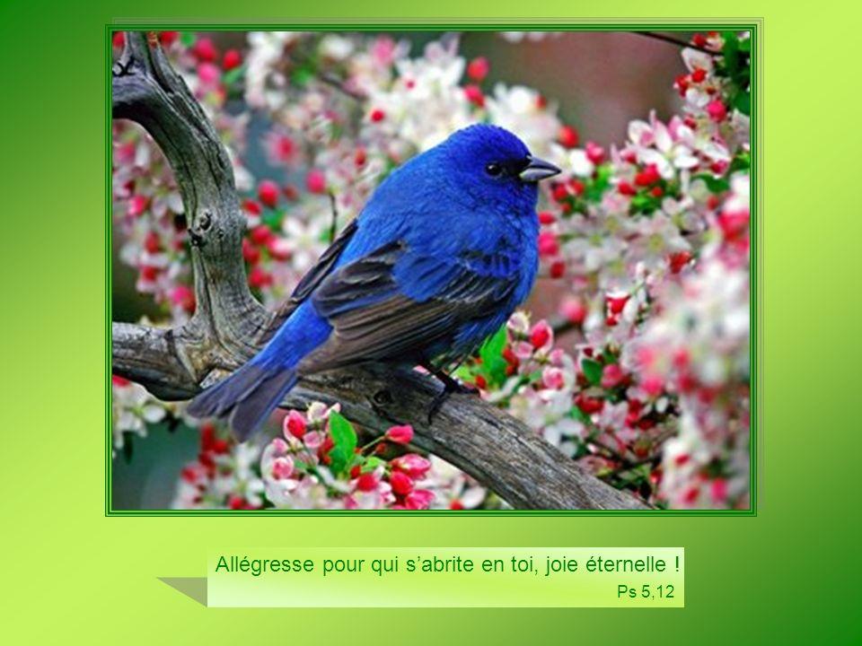 Allégresse pour qui sabrite en toi, joie éternelle ! Ps 5,12