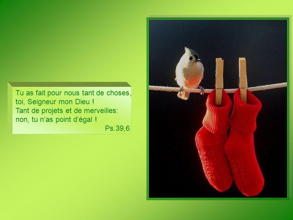 Ma bouche dira des paroles de sagesse, les propos clairvoyants de mon cœur. Ps 48,4