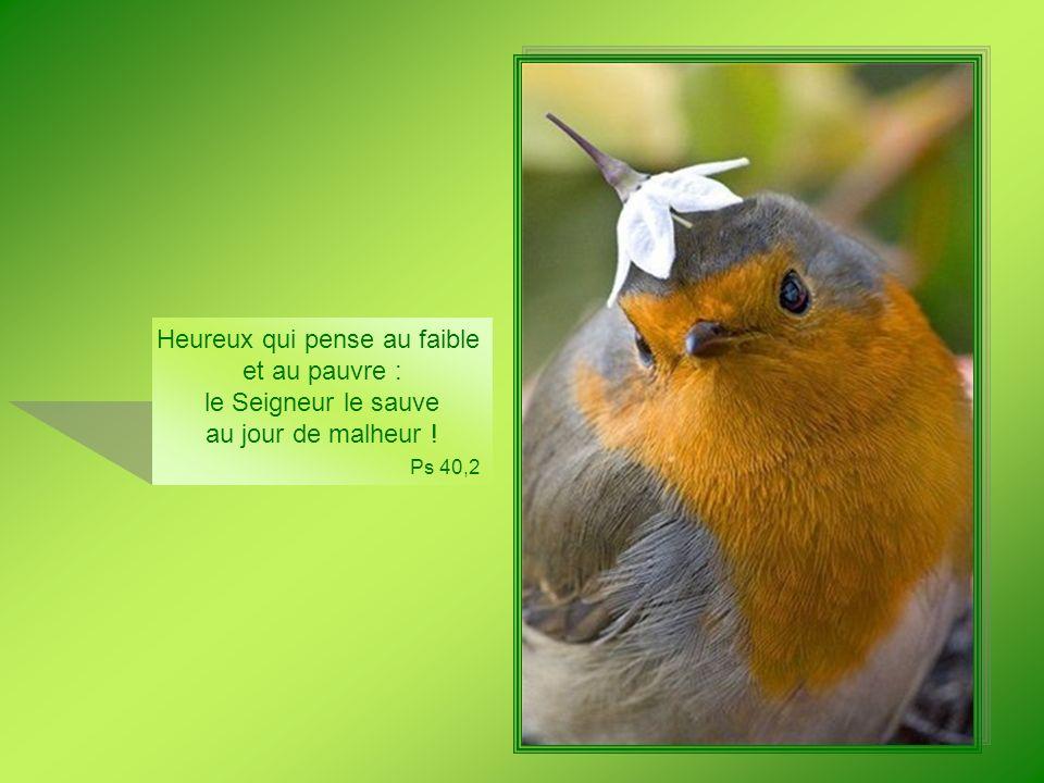Tu visites la terre et tu labreuves, tu la combles de richesses : les ruisseaux de Dieu regorgent deau, tu prépares les moissons.