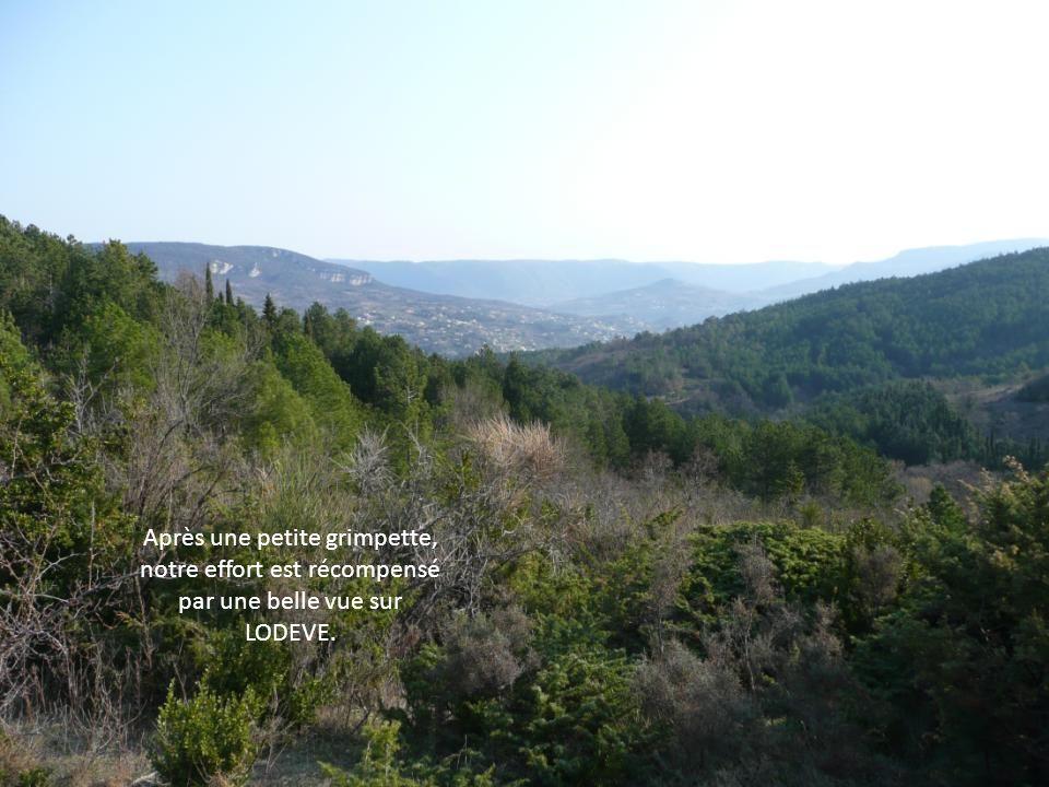 Après une petite grimpette, notre effort est récompensé par une belle vue sur LODEVE.