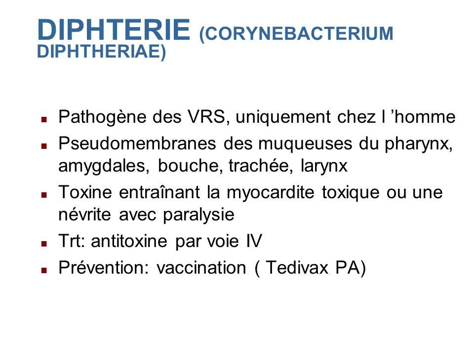 DIPHTERIE (CORYNEBACTERIUM DIPHTHERIAE) Pathogène des VRS, uniquement chez l homme Pseudomembranes des muqueuses du pharynx, amygdales, bouche, trachée, larynx Toxine entraînant la myocardite toxique ou une névrite avec paralysie Trt: antitoxine par voie IV Prévention: vaccination ( Tedivax PA)