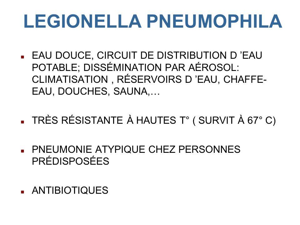 LEGIONELLA PNEUMOPHILA EAU DOUCE, CIRCUIT DE DISTRIBUTION D EAU POTABLE; DISSÉMINATION PAR AÉROSOL: CLIMATISATION, RÉSERVOIRS D EAU, CHAFFE- EAU, DOUCHES, SAUNA,… TRÈS RÉSISTANTE À HAUTES T° ( SURVIT À 67° C) PNEUMONIE ATYPIQUE CHEZ PERSONNES PRÉDISPOSÉES ANTIBIOTIQUES