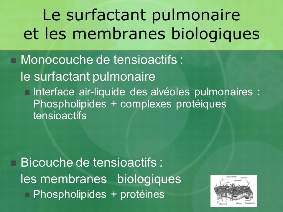 Le surfactant pulmonaire et les membranes biologiques Monocouche de tensioactifs : le surfactant pulmonaire Interface air-liquide des alvéoles pulmonaires : Phospholipides + complexes protéiques tensioactifs Bicouche de tensioactifs : les membranes biologiques Phospholipides + protéines