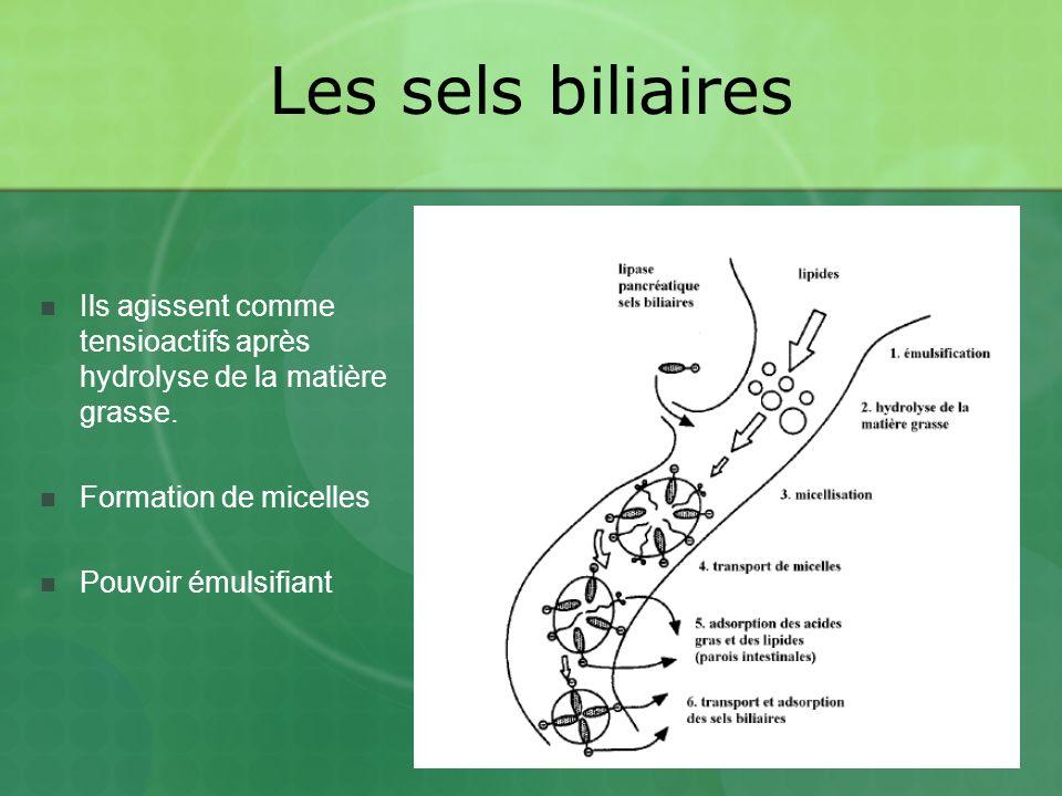 Les sels biliaires Ils agissent comme tensioactifs après hydrolyse de la matière grasse.
