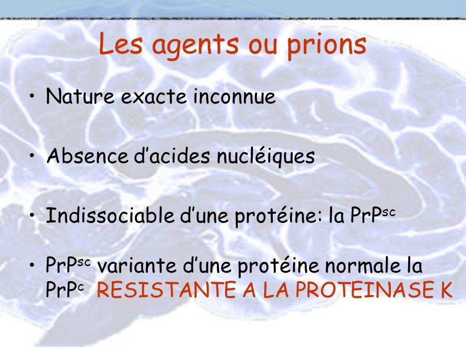 Les agents ou prions Nature exacte inconnue Absence dacides nucléiques Indissociable dune protéine: la PrP sc PrP sc variante dune protéine normale la