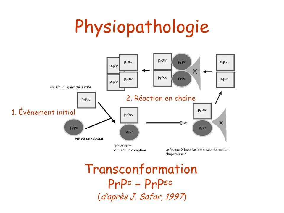 Transconformation PrP c – PrP sc (daprès J. Safar, 1997) Physiopathologie 1. Évènement initial 2. Réaction en chaîne