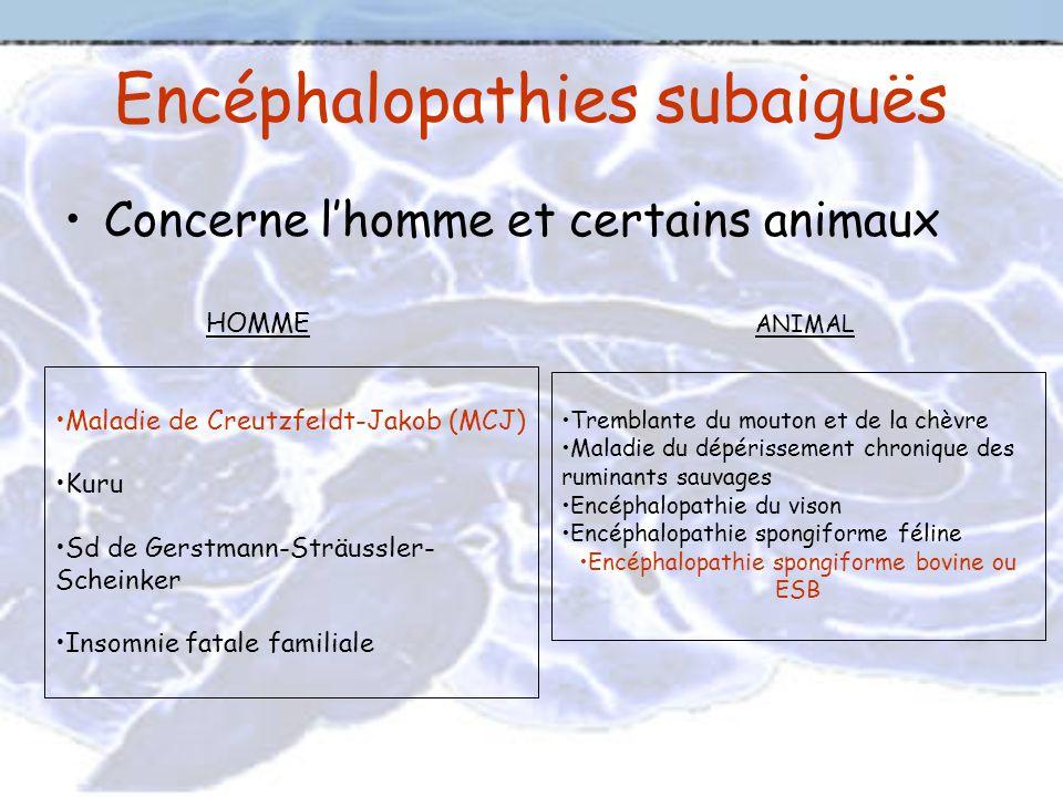 Encéphalopathies subaiguës Concerne lhomme et certains animaux Maladie de Creutzfeldt-Jakob (MCJ) Kuru Sd de Gerstmann-Sträussler- Scheinker Insomnie
