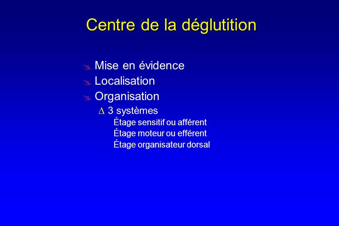 Mise en évidence Localisation Organisation 3 systèmes Étage sensitif ou afférent Étage moteur ou efférent Étage organisateur dorsal Centre de la déglu