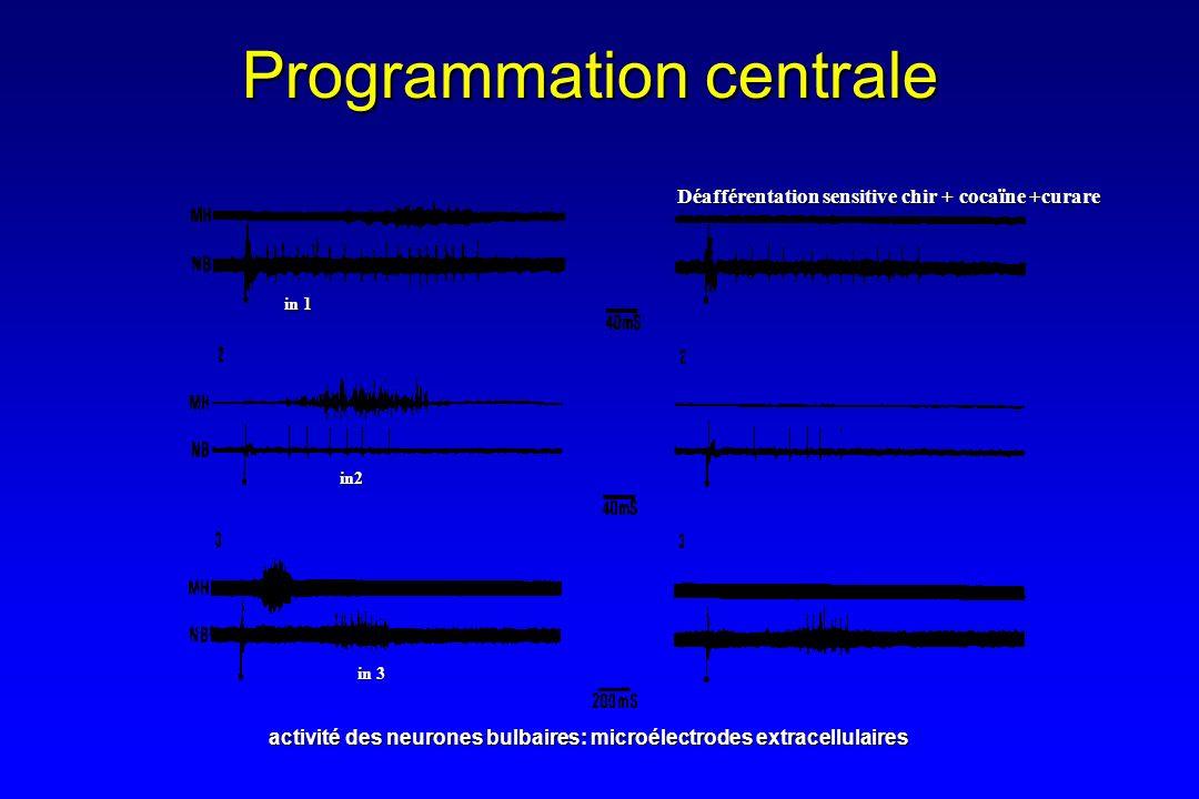 in 1 in 3 in2 activité des neurones bulbaires: microélectrodes extracellulaires Déafférentation sensitive chir + cocaïne +curare Programmation central