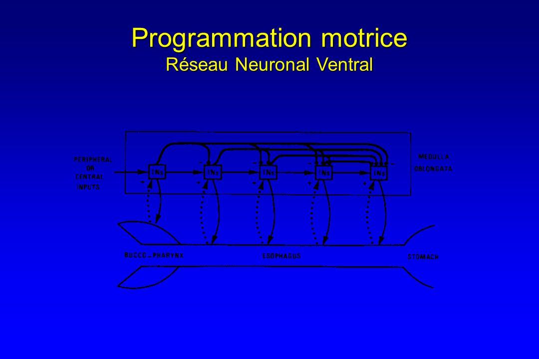 Programmation motrice Réseau Neuronal Ventral