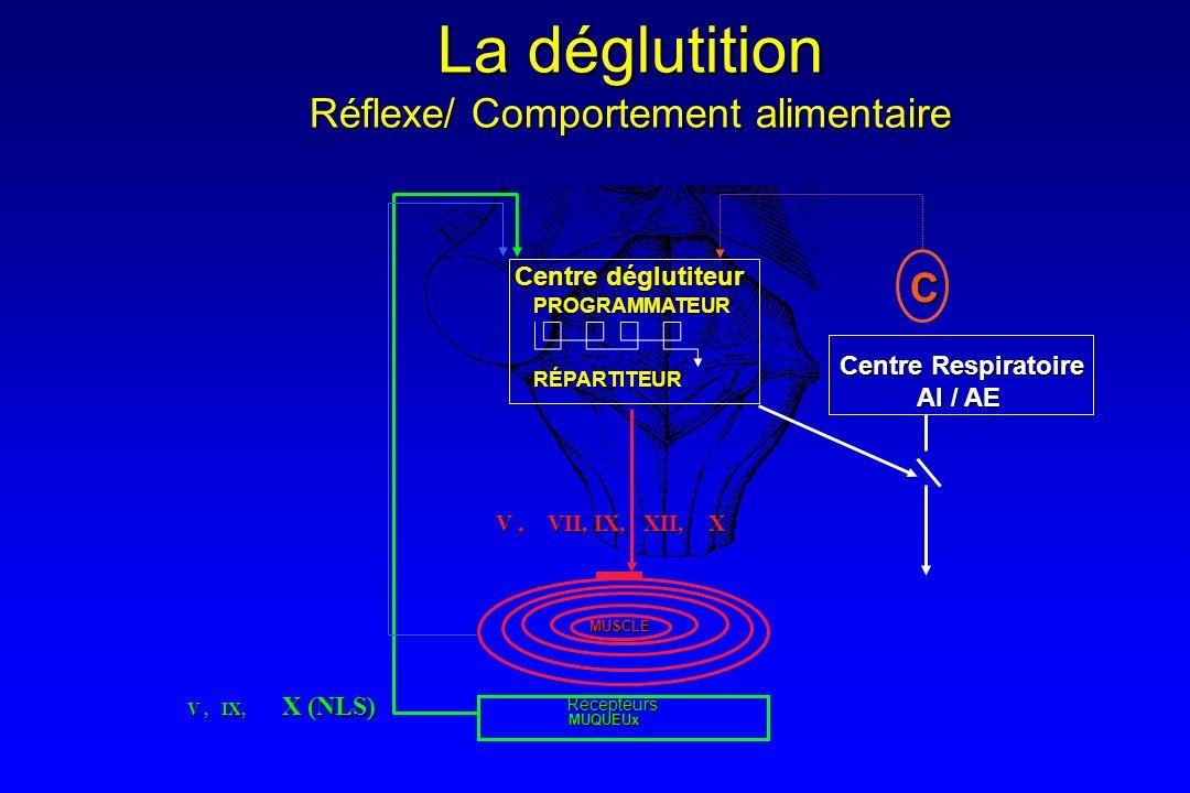 MUQUEUx MUSCLE Centre Respiratoire AI / AE PROGRAMMATEURRÉPARTITEUR Centre déglutiteur V, VII, IX, XII, X V, IX, X (NLS) C La déglutition Réflexe/ Com