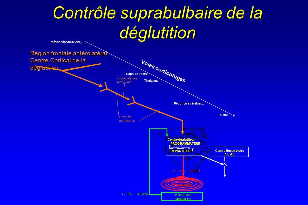 Contrôle suprabulbaire de la déglutition MUQUEUx MUSCLE Centre Respiratoire AI / AE PROGRAMMATEURRÉPARTITEUR Centre déglutiteur V, VII, XII, X V, IX,