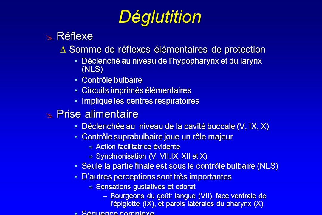 Déglutition Réflexe Réflexe Somme de réflexes élémentaires de protectionSomme de réflexes élémentaires de protection Déclenché au niveau de lhypophary