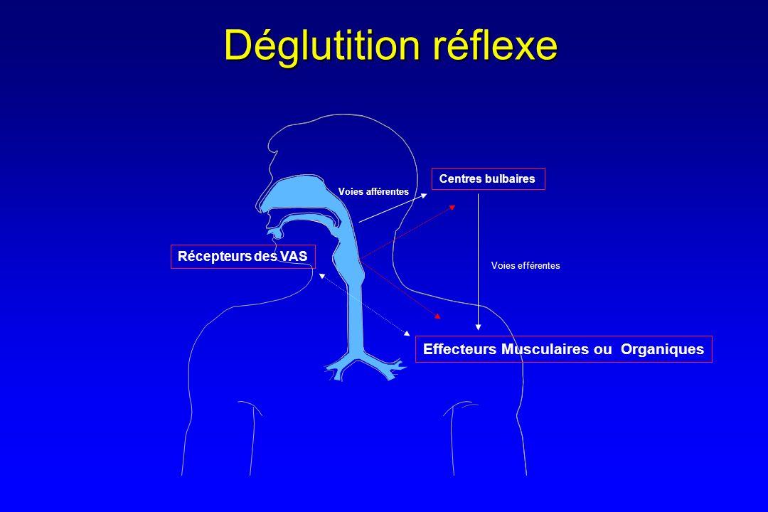 Contrôle suprabulbaire de la déglutition MUQUEUx MUSCLE Centre Respiratoire AI / AE PROGRAMMATEURRÉPARTITEUR Centre déglutiteur V, VII, XII, X V, IX, X (NLS) Récepteurs Région frontale antérolatéral Centre Cortical de la déglutition Mésencéphale (FAinf) Bulbe Voies corticofuges Pédoncule cérébraux Capsule interne Thalamus Hypothalamus Amygdale Contrôle cérébeleux