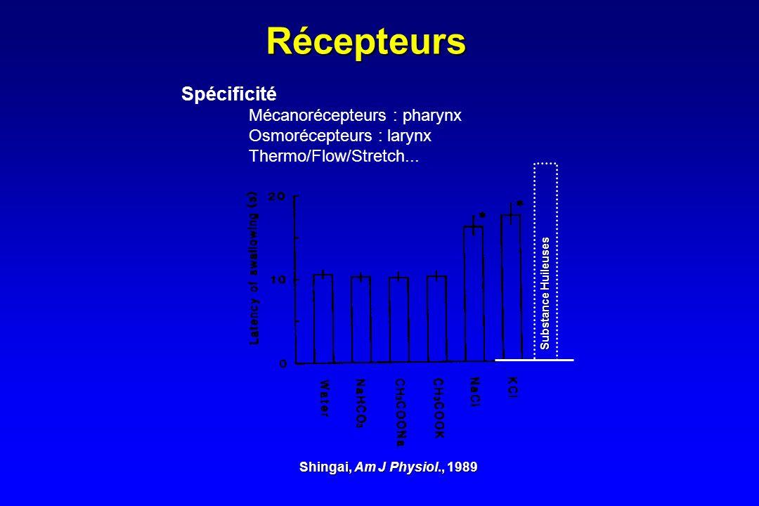 Récepteurs Spécificité Mécanorécepteurs : pharynx Osmorécepteurs : larynx Thermo/Flow/Stretch... Shingai, Am J Physiol., 1989 Substance Huileuses