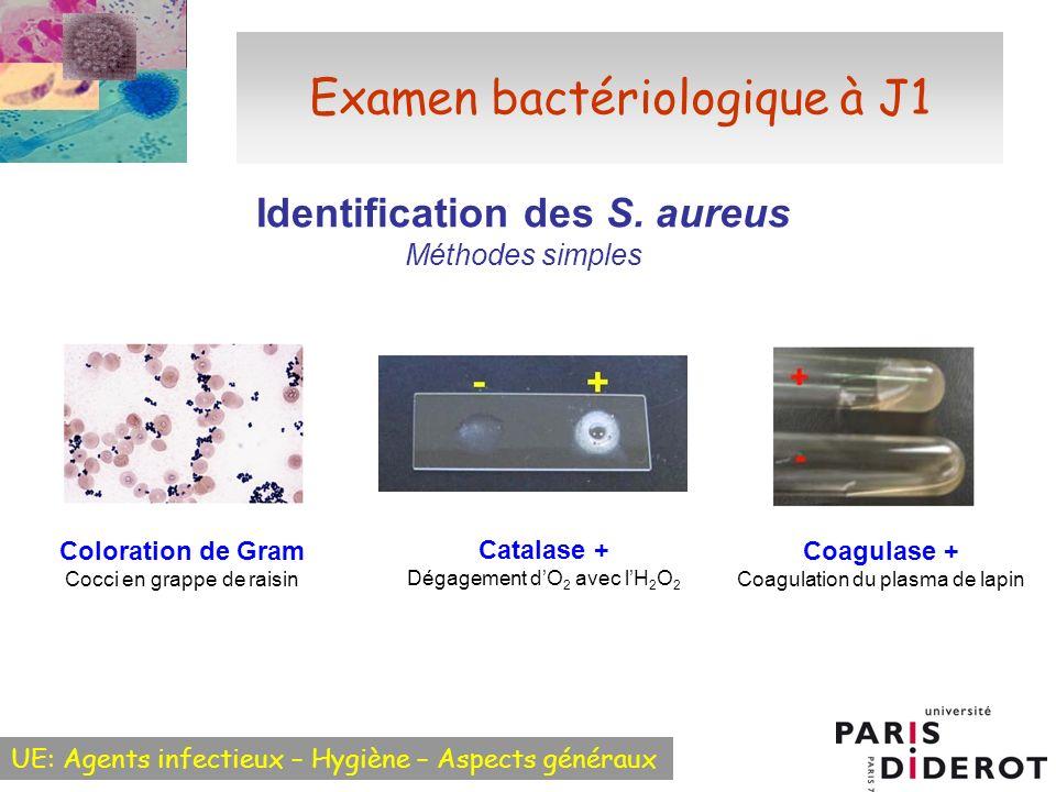 UE: Agents infectieux – Hygiène – Aspects généraux Examen bactériologique à J1 Identification des S. aureus Méthodes simples Coloration de Gram Cocci