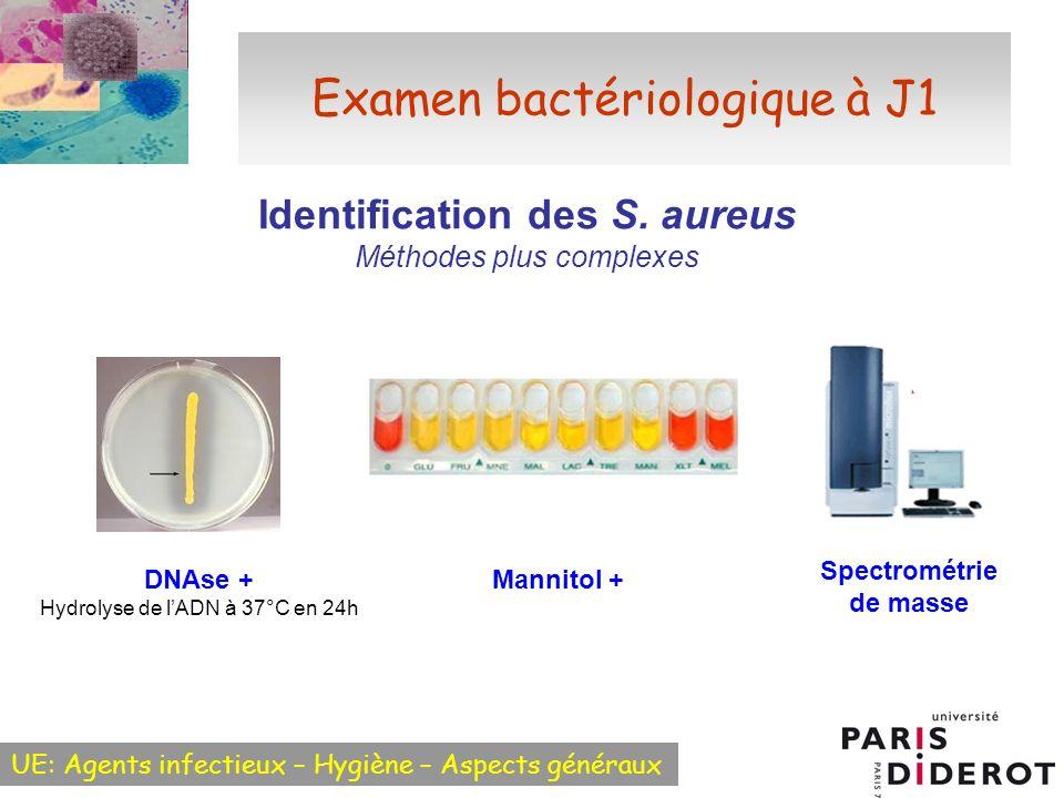 UE: Agents infectieux – Hygiène – Aspects généraux Examen bactériologique à J1 Identification des S. aureus Méthodes plus complexes DNAse + Hydrolyse