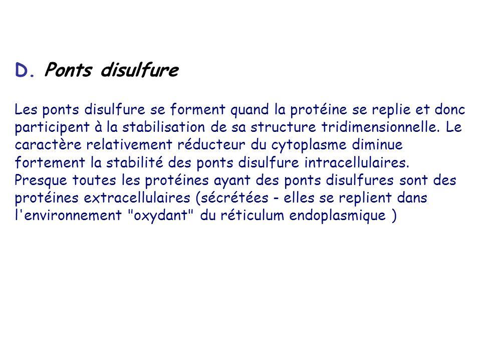 D. Ponts disulfure Les ponts disulfure se forment quand la protéine se replie et donc participent à la stabilisation de sa structure tridimensionnelle