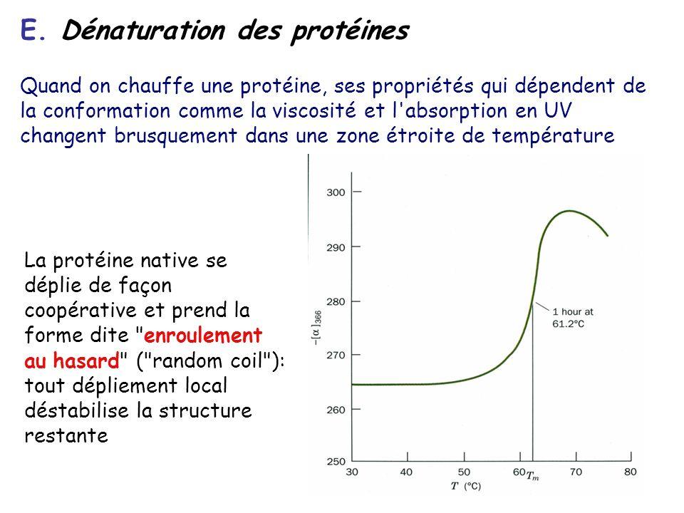 E. Dénaturation des protéines Quand on chauffe une protéine, ses propriétés qui dépendent de la conformation comme la viscosité et l'absorption en UV