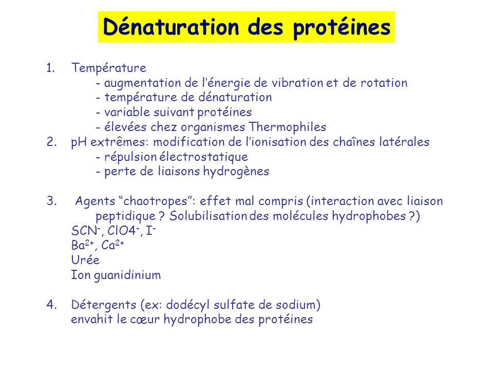 Dénaturation des protéines 1.Température - augmentation de lénergie de vibration et de rotation - température de dénaturation - variable suivant protéines - élevées chez organismes Thermophiles 2.