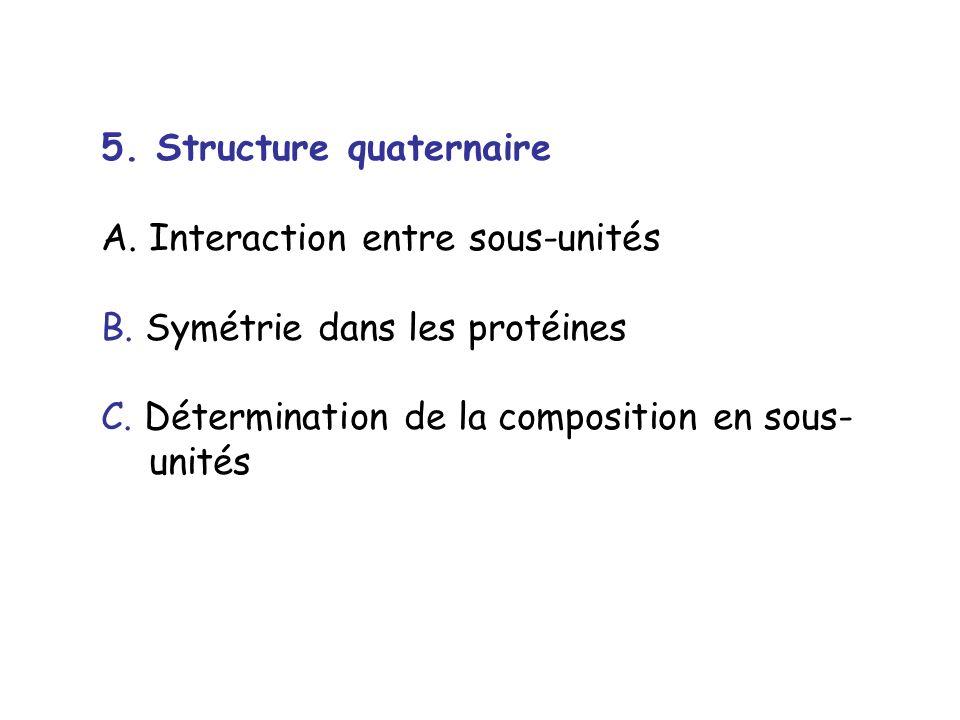 5. Structure quaternaire A.Interaction entre sous-unités B. Symétrie dans les protéines C. Détermination de la composition en sous- unités