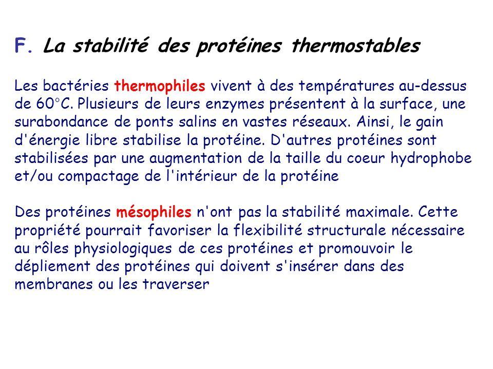 F. La stabilité des protéines thermostables Les bactéries thermophiles vivent à des températures au-dessus de 60°C. Plusieurs de leurs enzymes présent