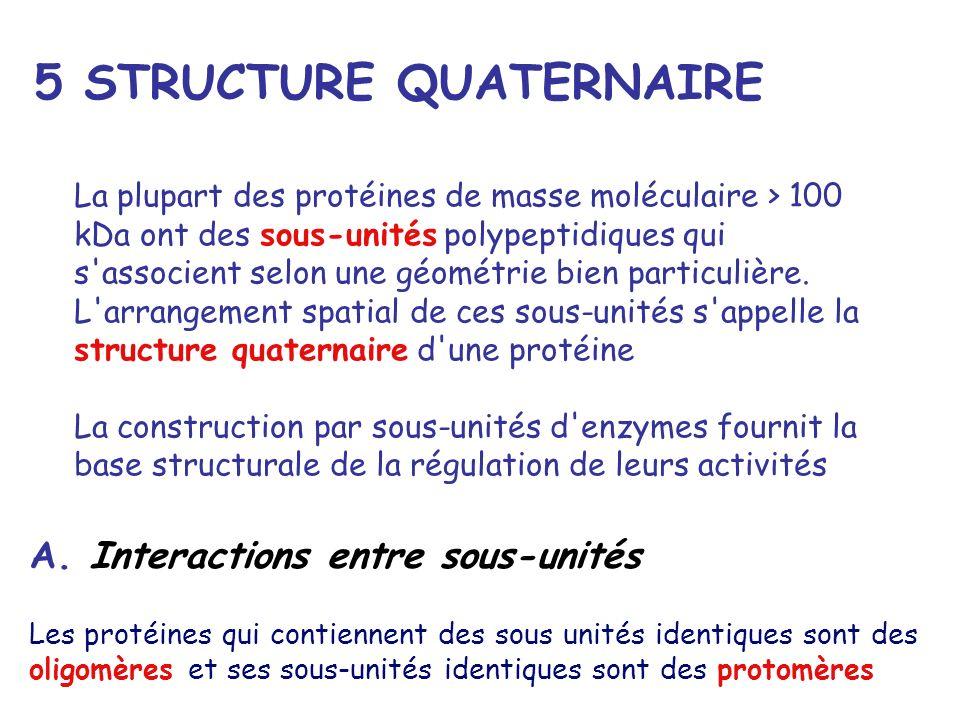 5 STRUCTURE QUATERNAIRE La plupart des protéines de masse moléculaire > 100 kDa ont des sous-unités polypeptidiques qui s'associent selon une géométri