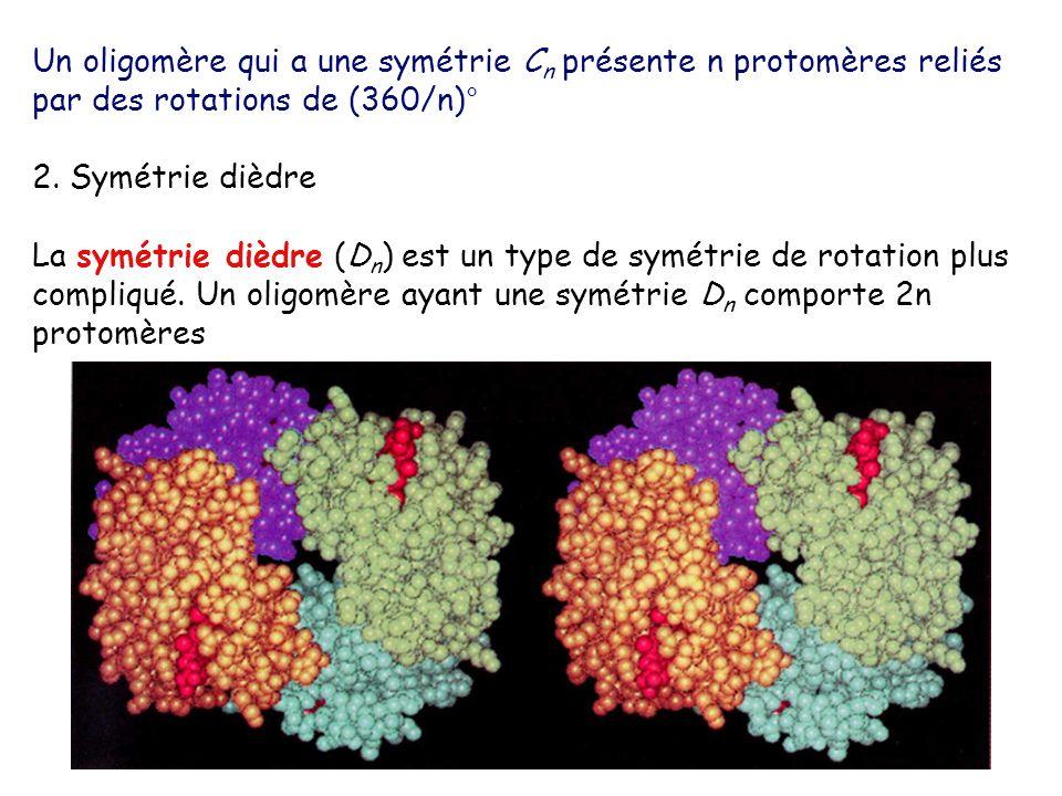 Un oligomère qui a une symétrie C n présente n protomères reliés par des rotations de (360/n)° 2. Symétrie dièdre La symétrie dièdre (D n ) est un typ