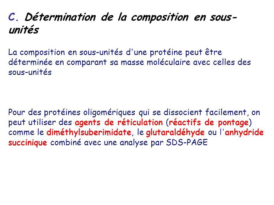 C. Détermination de la composition en sous- unités La composition en sous-unités d'une protéine peut être déterminée en comparant sa masse moléculaire