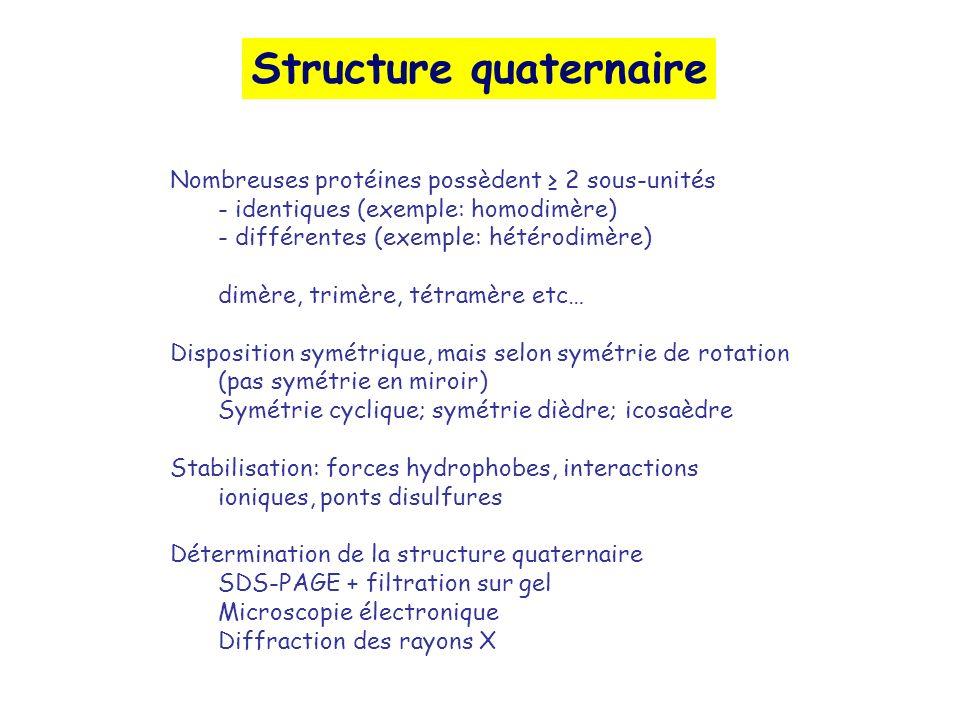 Structure quaternaire Nombreuses protéines possèdent 2 sous-unités - identiques (exemple: homodimère) - différentes (exemple: hétérodimère) dimère, trimère, tétramère etc… Disposition symétrique, mais selon symétrie de rotation (pas symétrie en miroir) Symétrie cyclique; symétrie dièdre; icosaèdre Stabilisation: forces hydrophobes, interactions ioniques, ponts disulfures Détermination de la structure quaternaire SDS-PAGE + filtration sur gel Microscopie électronique Diffraction des rayons X
