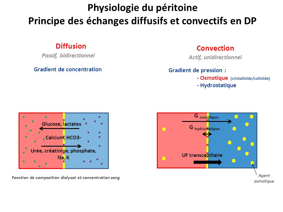 UF transcapillaire UF nette Réabsorption lymphatique Physiologie du péritoine : lultrafiltration nette En pratique : UF nette = UF mesurée =V drainé - V infusé UF nette = UF transcapillaire – réabsorption lymphatique Obligatoire et constante (0,5 à 1,5mL/h) Dépend de la structure de mb péritonéale et de la PIP Réabsorption iso-osmotique, isonatrique