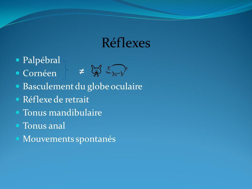 Réflexes Palpébral Cornéen Basculement du globe oculaire Réflexe de retrait Tonus mandibulaire Tonus anal Mouvements spontanés