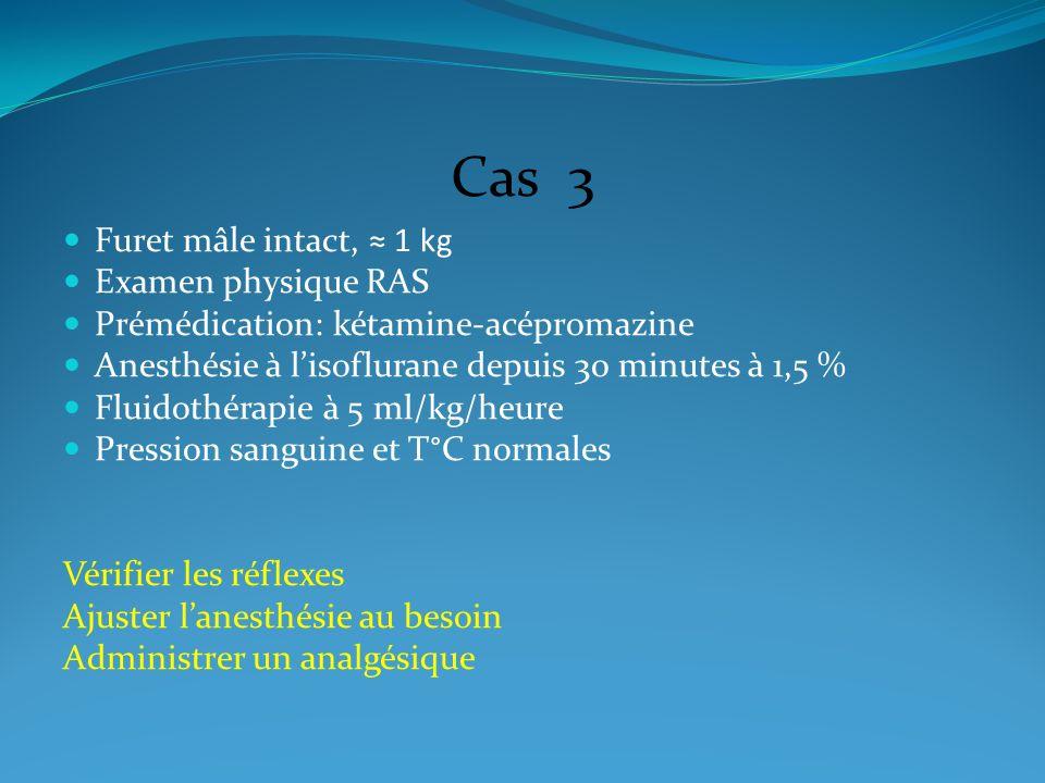 Cas 3 Furet mâle intact, 1 kg Examen physique RAS Prémédication: kétamine-acépromazine Anesthésie à lisoflurane depuis 30 minutes à 1,5 % Fluidothérap