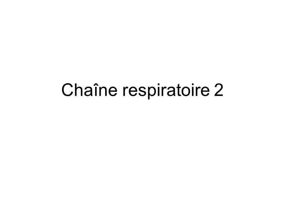Chaîne respiratoire 2