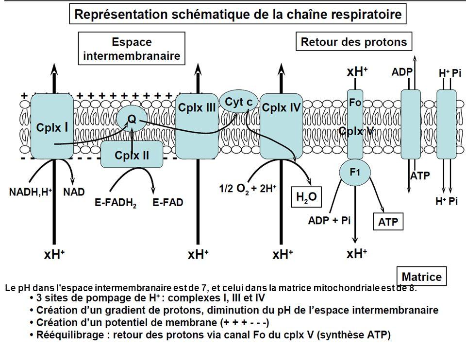 Le pH dans lespace intermembranaire est de 7, et celui dans la matrice mitochondriale est de 8.