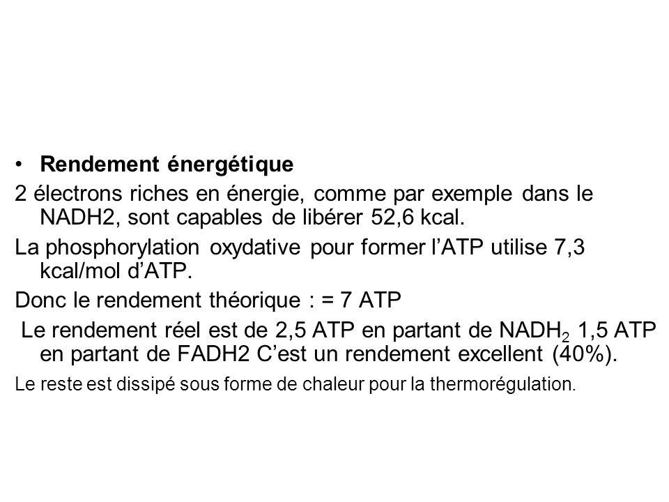 Rendement énergétique 2 électrons riches en énergie, comme par exemple dans le NADH2, sont capables de libérer 52,6 kcal. La phosphorylation oxydative
