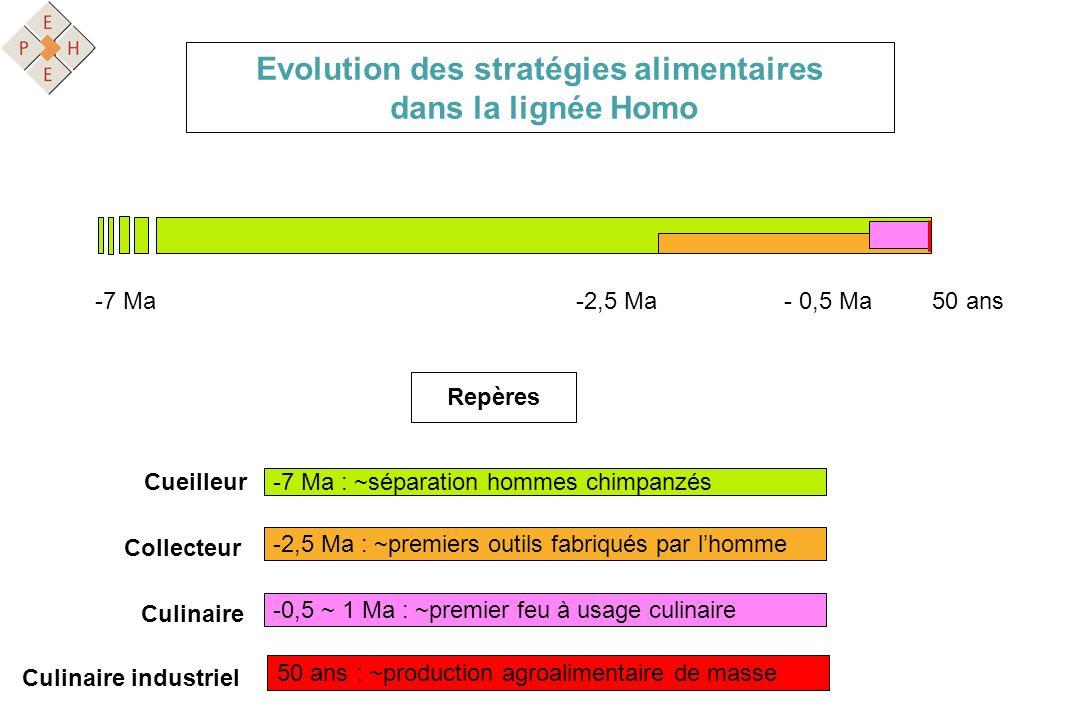 Evolution des stratégies alimentaires dans la lignée Homo Cueilleur -7 Ma : ~séparation hommes chimpanzés Collecteur -2,5 Ma : ~premiers outils fabriq