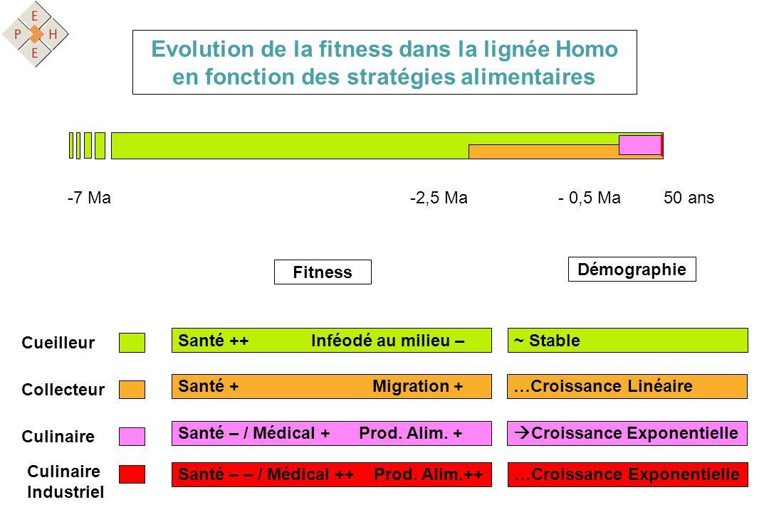 Evolution de la fitness dans la lignée Homo en fonction des stratégies alimentaires Cueilleur Collecteur Culinaire Fitness Santé ++ Inféodé au milieu