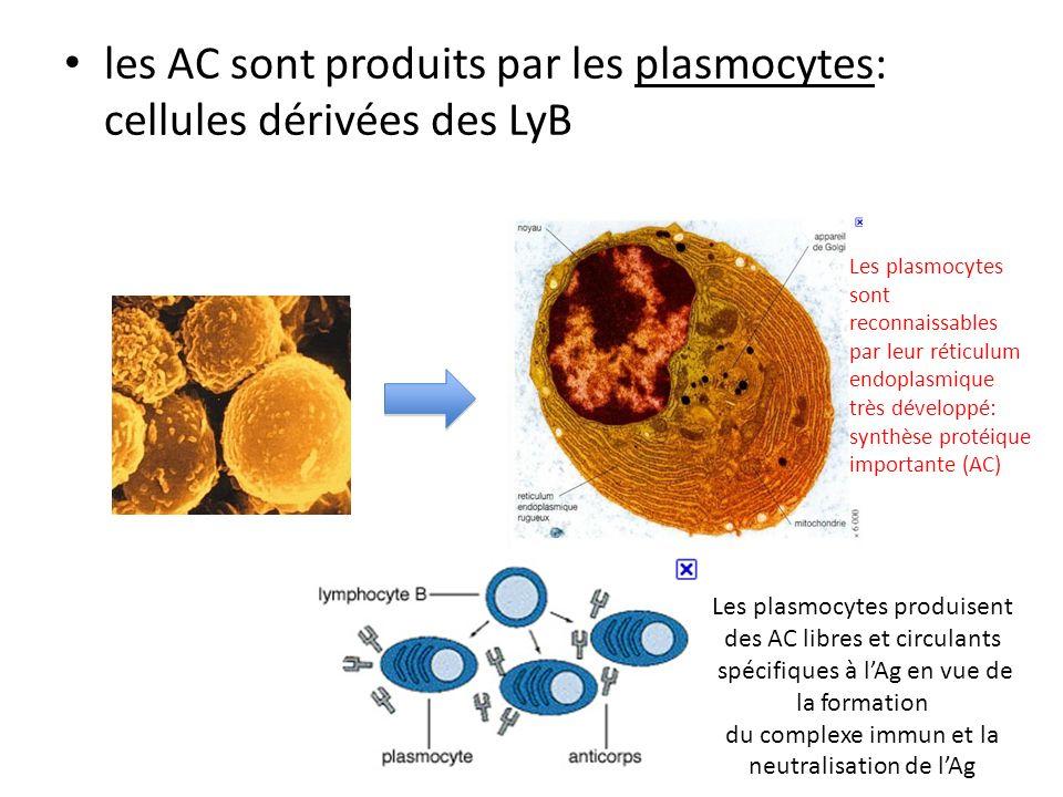 les AC sont produits par les plasmocytes: cellules dérivées des LyB Les plasmocytes produisent des AC libres et circulants spécifiques à lAg en vue de