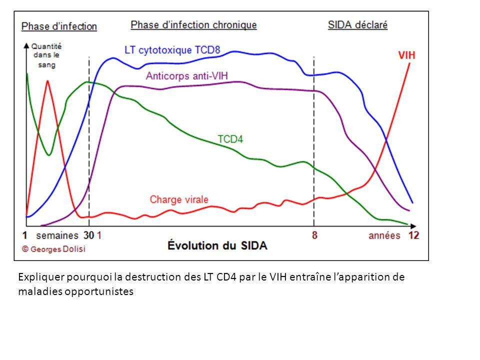 Expliquer pourquoi la destruction des LT CD4 par le VIH entraîne lapparition de maladies opportunistes