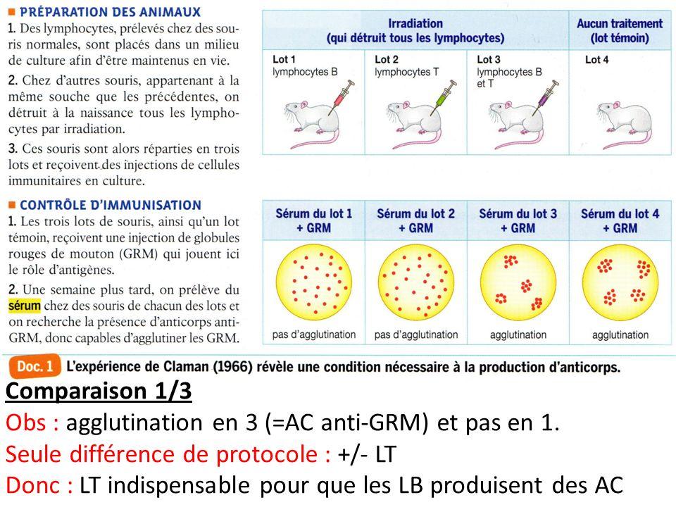Comparaison 1/3 Obs : agglutination en 3 (=AC anti-GRM) et pas en 1. Seule différence de protocole : +/- LT Donc : LT indispensable pour que les LB pr