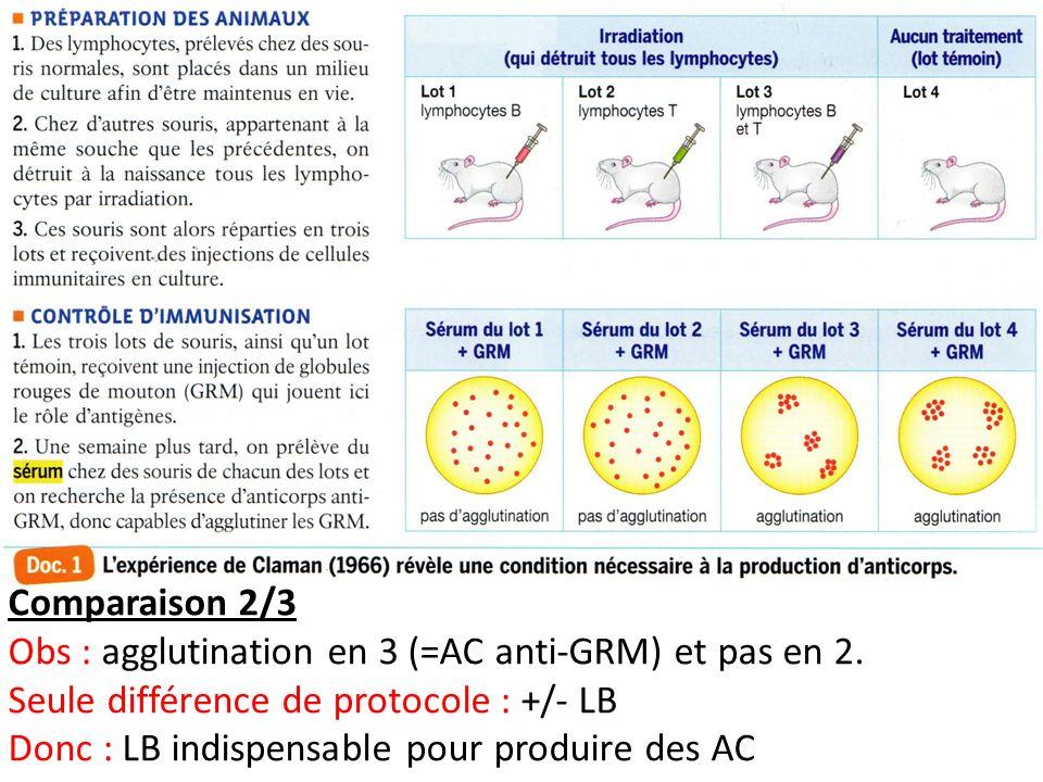 Comparaison 2/3 Obs : agglutination en 3 (=AC anti-GRM) et pas en 2. Seule différence de protocole : +/- LB Donc : LB indispensable pour produire des
